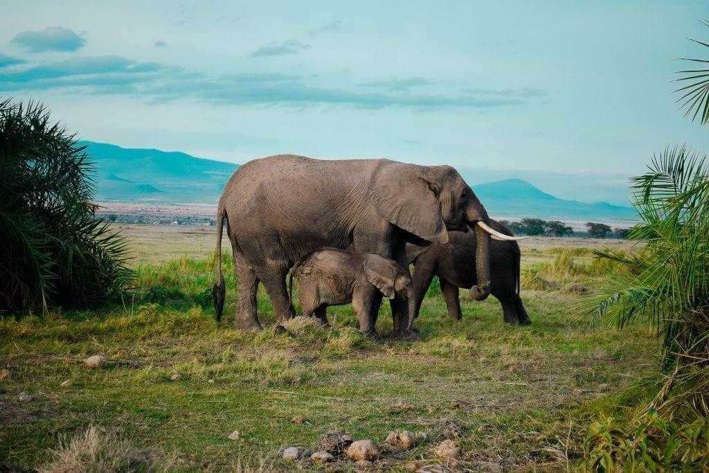 תמונה של פילים מתוך טיול ספארי באפריקה