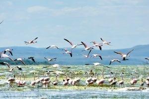 תמונה של להקת פלמנקו מתוך טיול לקניה