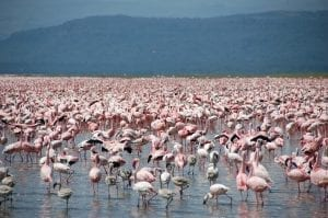 תמונה של להקת פלמנקו מתוך טיול ספארי באפריקה של חברת Kenya Kosher Travel