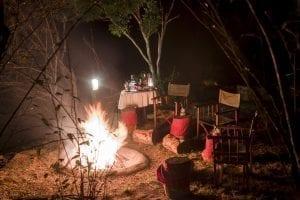 תמונה של פיעלות ערב שצולמה בזמן טיול ספארי באפריקה