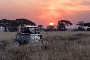 תמונה מתוך טיול ספארי באפריקה
