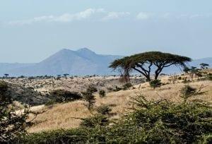 תמונה של נוף מתוך טיול ספארי באפריקה