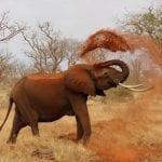 תמונה של פיל מתוך טיול לקניה