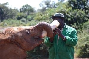 תמונה של פיל שצולמה בזמן טיול ספארי באפריקה