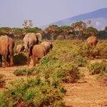 תמונה של פילים מתוך טיול לקניה