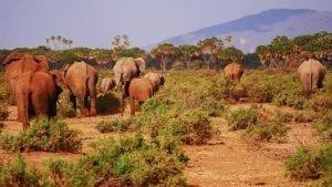 תמונה להקת פילים מתוך טיול ספארי לאפריקה