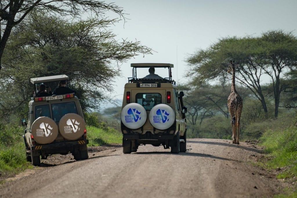 תמונה של מטיילים בזמן טיול ספארי באפריקה