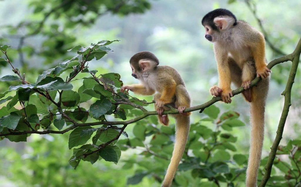 תמונה של קופים מתוך טיול ספארי באפריקה