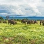 תמונה של פילים שצולמה במהלך טיול ספארי באפריקה