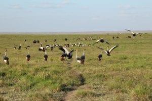 תמונה של ציפורים שצולמה במהלך טיול ספארי באפריקה