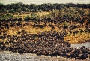 תמונה של להקת תאו מתוך טיול לקניה