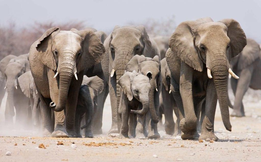 תמונה של פילים שצולמה במהלך טיול לקניה
