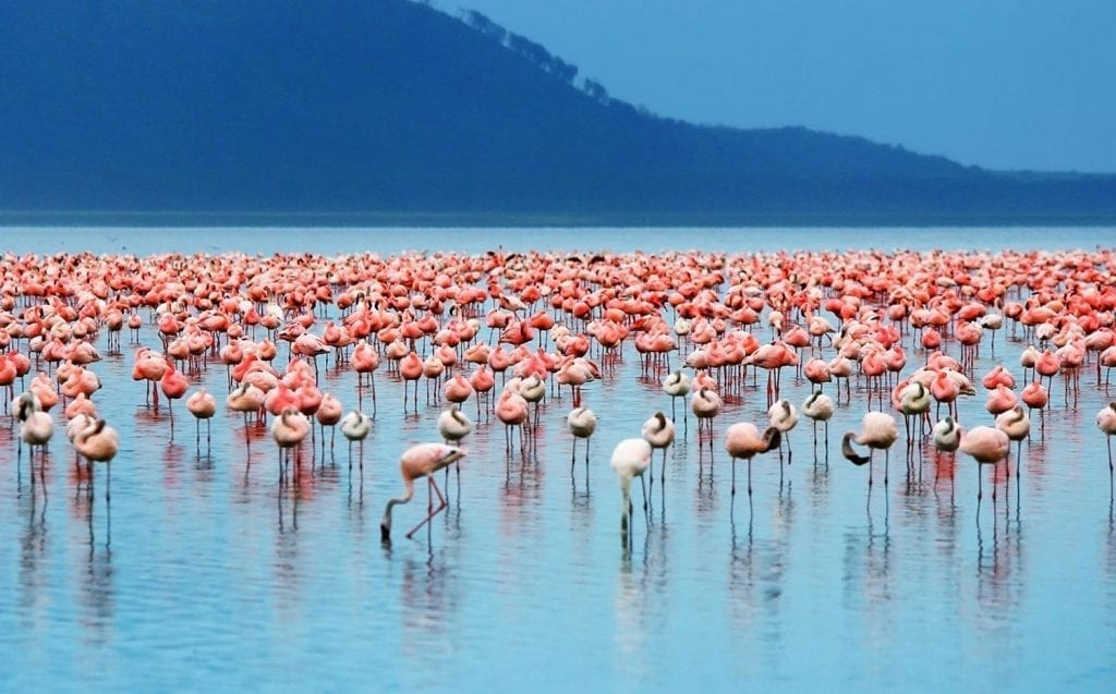 תמונה של פלאמנקו שצולמה במהלך טיול לקניה