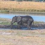 תמונה של פילים שצולמה בזמן טיול ספארי באפריקה