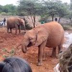 תמונה של פילים בזמן טיול ספארי באפריקה