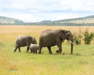 תמונה של פילים בחופשה משפחתית בקניה
