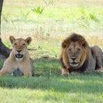 שמורות טבע באפריקה